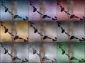 Mursaat Bow colored.jpg