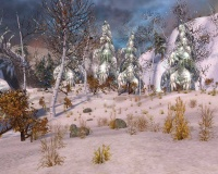 Frozen Forest.jpg