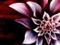 Bloody Lotus.jpg