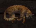 Cat xaquang skyway.JPG