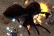Dune Beetle Queen.jpg