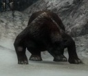 Rabid Bear.jpg