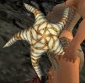Starfish Focus.jpg