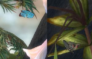 Sanctum butterfly.jpg