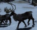 ReindeerA.jpg