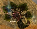 Mirage Iboga.jpg