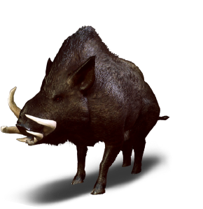 Tw3 journal wild boar.png
