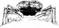 Krabbenspinne.jpg