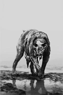 Hellhound photo.png