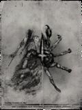 Killed assassin spider.png