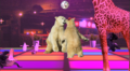 Disco Bear3.png
