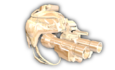 K. Style NVG (Gold).png