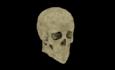 Hgear halloween skull.png