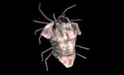 Heavy Armor Spider