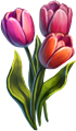 Tulips Seeds.png