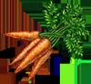 Carrot Seeds.png