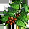 Coffee Seeds.png