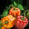 Sweet Pepper Seeds.png