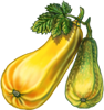 Marrow Seeds.png