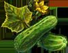Cucumber Seeds.png