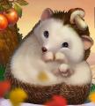 Hedgehog-mainpage.png