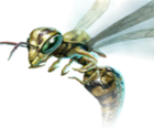 Forest Wasp.png