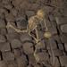 SkeletonHarvester.png