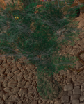 IllusoryTree.png