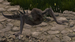 ThicketCrawler.png