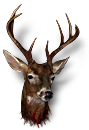 Big deer head.png