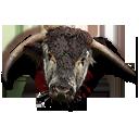 Bull head.png