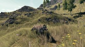 Animal wolf.jpg