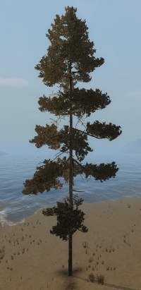 Pine tree.png