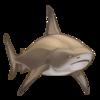 Bull shark.png