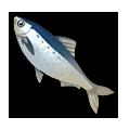Sardine.png