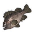 Red Rockfish.png