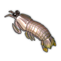 Mantis Shrimp.png