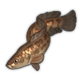 Northern Snakehead.png