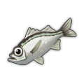 Silver Perch.png