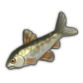 Cyprinid.png