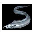 Cutlassfish.png