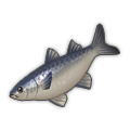 Flathead Grey Mullet.png