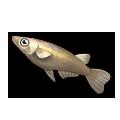 Ricefish.png