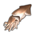 Squid.png