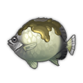 Smoky Butterflyfish.png