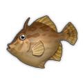 Thread-Sail Filefish.png