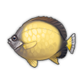 Sunny Butterflyfish.png