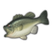 Largemouth Bass.png