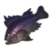 Purple Rockfish.png