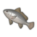 Black Drum.png